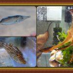2015年 採集魚報告