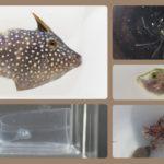 2017年 採集珍魚ランキング発表