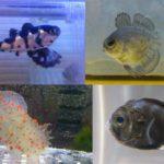 2014年 採集魚報告